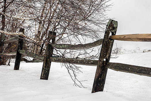 Fenced In by Robert Mitchell