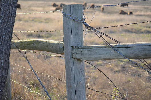 Fenced by Kelly Kitchens