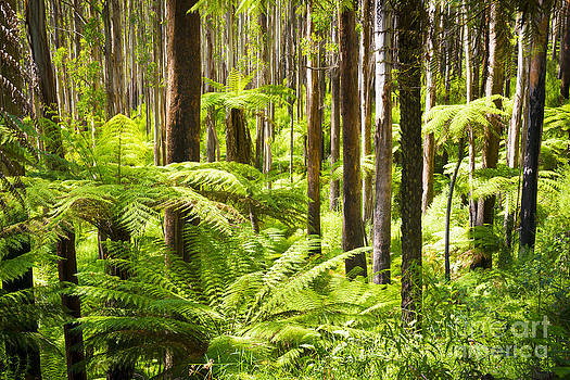 Tim Hester - Fern Forest