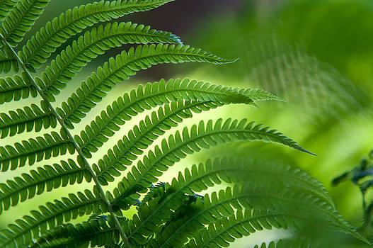 Jenny Rainbow - Fern Leaf 2. Healing Art