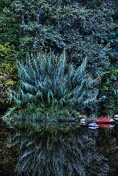 Isaac Silman - Fern plant reflection
