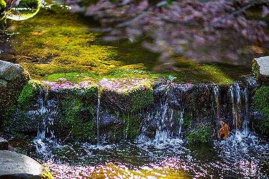 Fern Spring by Mike Lee