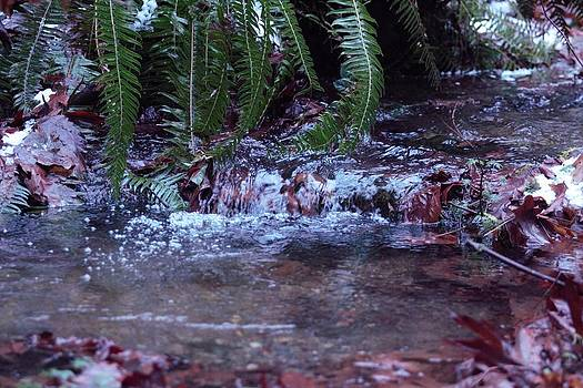 Ferns Dancing by Donald Torgerson