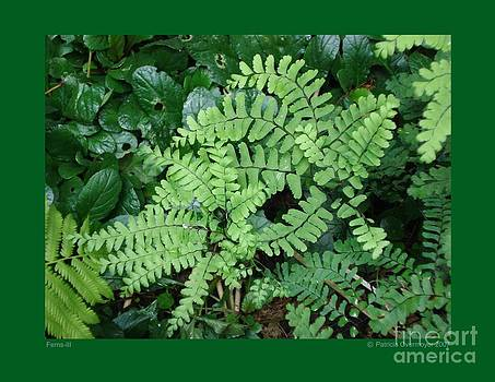 Ferns-III by Patricia Overmoyer