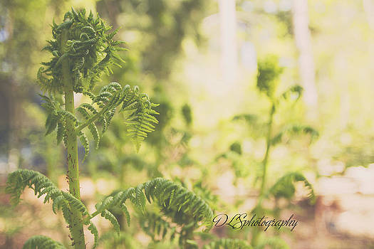 Ferns in the Forest by Danielle Silveira
