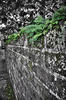 Ferns on Old Brick Wall by Andrew Crispi