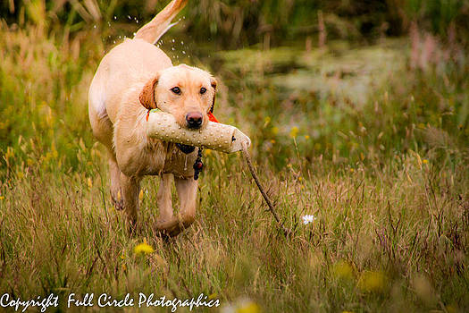 Fetch by Pandyce McCluer