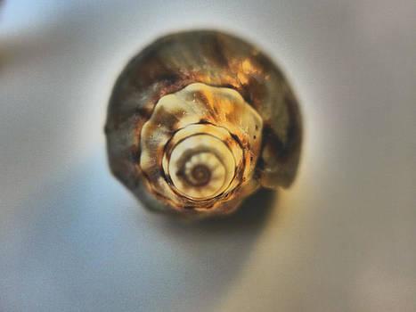 Fibonacci by Mick Logan