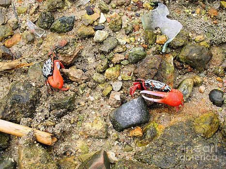 Fiddler Crabs Marsh by Kathy Daxon