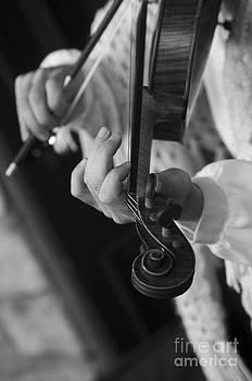 Fiddler by Cynthia Holling-Morris