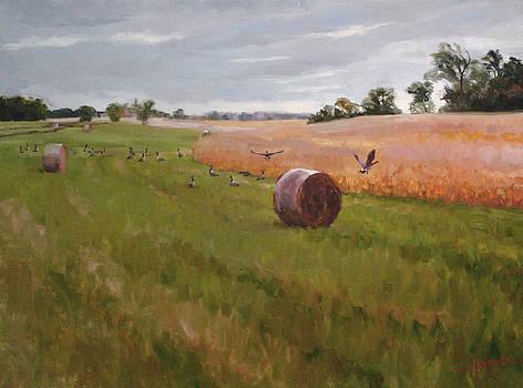 Field Day by Scott Harding