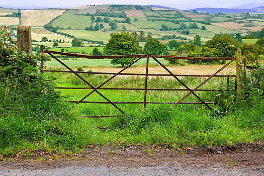 Jane McIlroy - Field Gate South Armagh