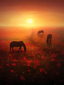Field of Dreams by Jennifer Woodward