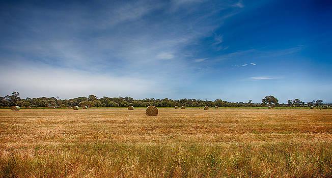 Field of Dreams by Shari Mattox