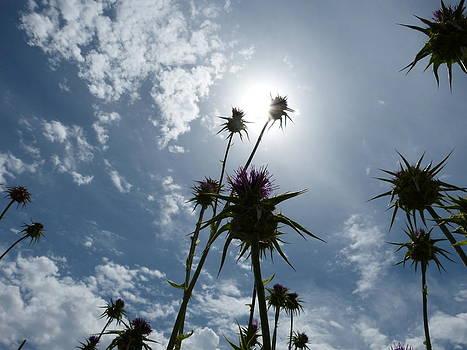 Field of dry flowers by Janina  Suuronen