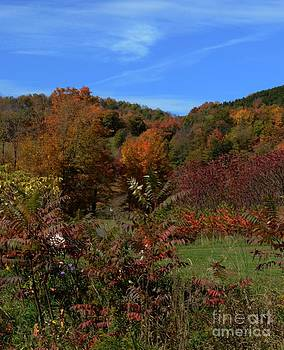 Field Of Fall Colors by Kathleen Struckle