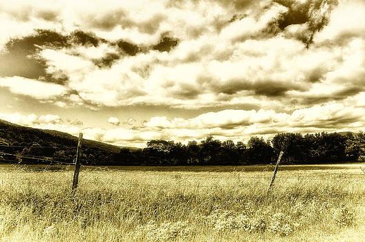 Field of Gold by Heather Bridenstine