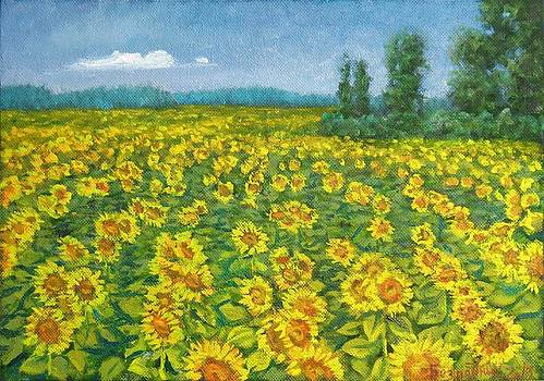 Field of sunflowers by Alexander Bezrodnykh