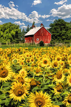 Christopher Arndt - Field of Sunflowers