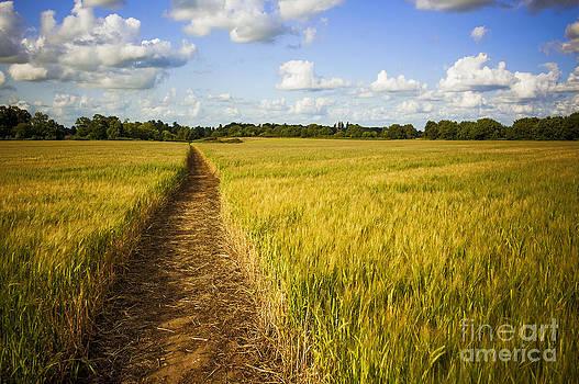 Svetlana Sewell - Field Road