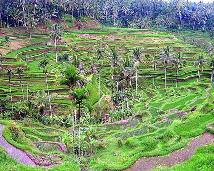 Ramona Johnston - Fields of Bali
