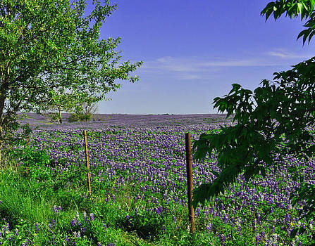 Fields of Blue by Timothy Johnson