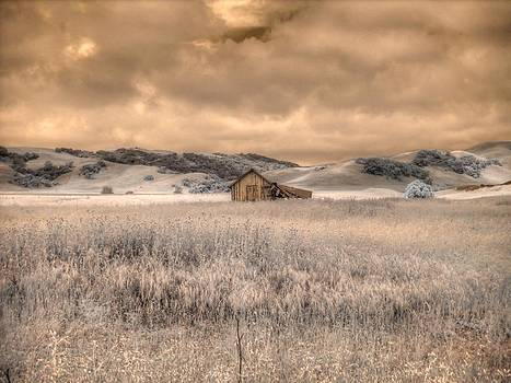 Fields of Gold by Jane Linders