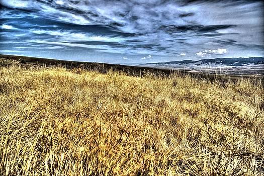 Fields of Gold  by Kevin Bone
