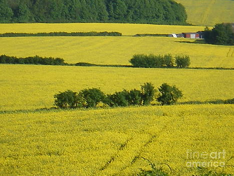 Fields Of Yellow by Ann Fellows