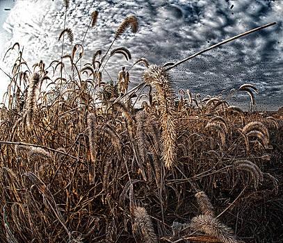 Fierce Grasses by Kimberleigh Ladd