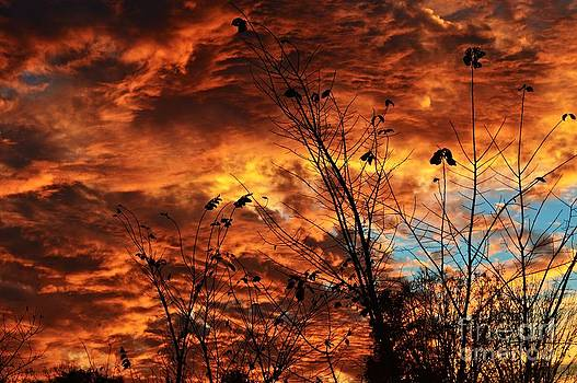 Fiery October Sky by Sharon L Stacy
