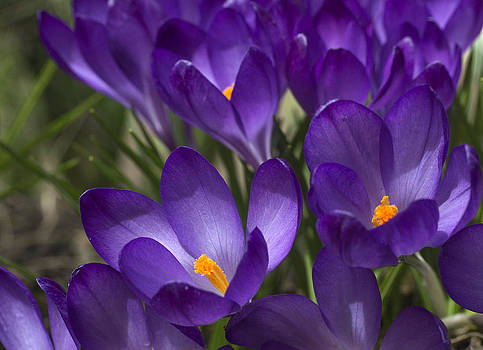 Arkady Kunysz - Finally spring