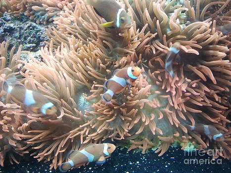 finding Nemo's cousin by Greg Davis