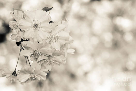 Hannes Cmarits - finest spring time - bw