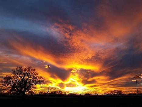Fire in the Sky by Shara  Wright