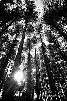 English Landscapes - Firestone Copse bw