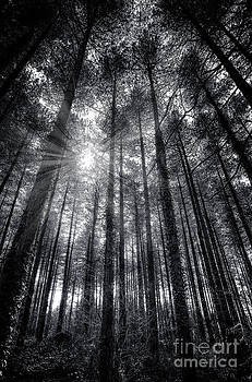 English Landscapes - Firestone Copse bw2