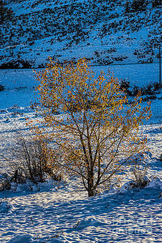 Jon Burch Photography - First Light