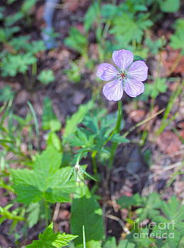 First Spring Wild Flower by Cres Archuleta