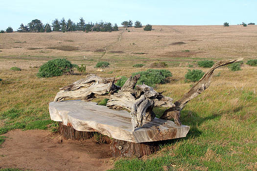 Fiscalini ranch bench by Jose M Beltran