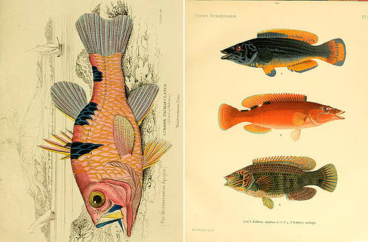 Fish 1 by Emis Miko