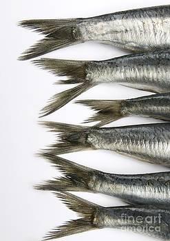 BERNARD JAUBERT - Fish