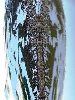 Fish bones Water Reflection after Rotation by Faouzi Taleb