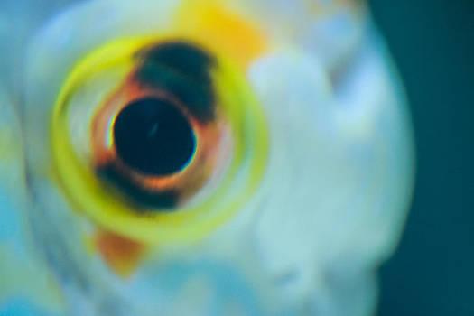 Fish Eye by Tinjoe Mbugus