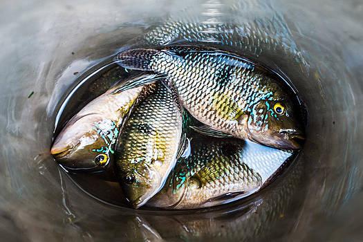 Fish by Igor Alecsander