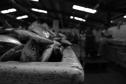 Fish Market in Dubai 2 by Maeve O Connell