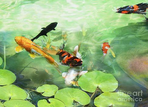 Fish by Paulo Sezio De Carvalho