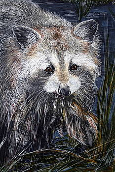 Fishing - Raccoon catching lunch by Jan Lowe
