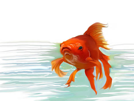 Fishy fishy fish by Christian Kolle