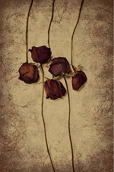 Five dried roses by Bernice Williams